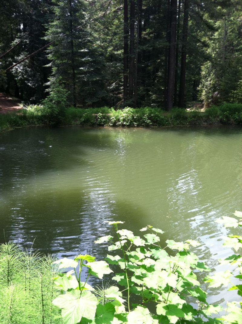 Pond for Garden pond reddit
